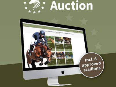 Every 10 days online auction with 10 horses
